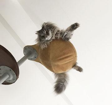 ガメラ猫だぜー!