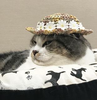 茶乃ちゃん帽子