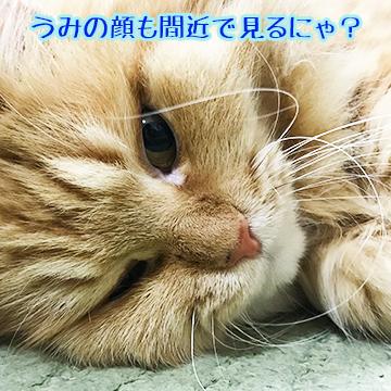 IMG_4775.jpg